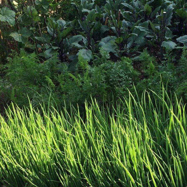 Gemüse aus dem eigenen Garten wird bei uns in der Küche verwendet.
