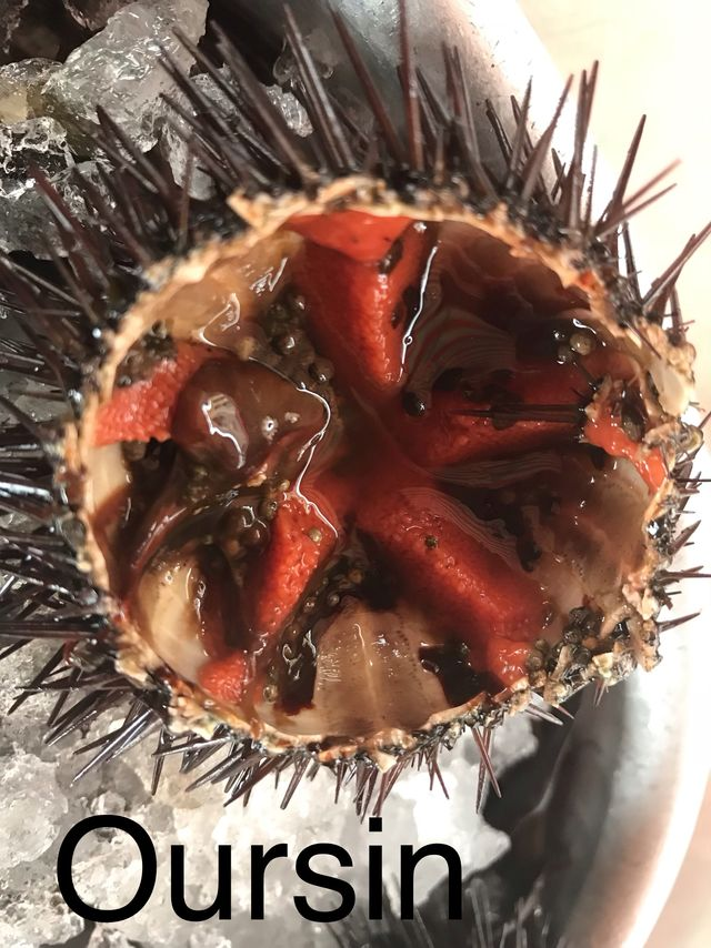 See urchin Oursin